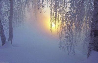 Зимний лес загадочный...